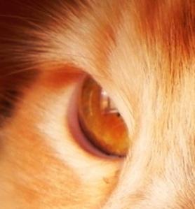 Second Eye