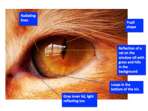 Cat's Eye Observation