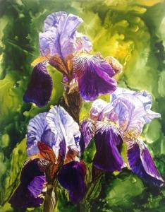 Purple Iris smlr