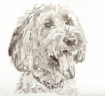 Labradoodle portrait based on Sandy Scott's image at PMP