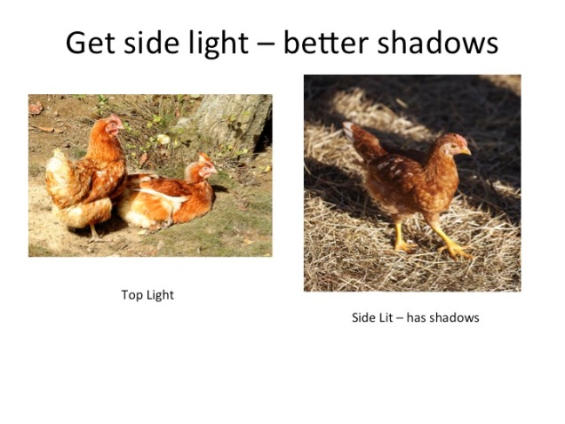 better-chickens-top-light