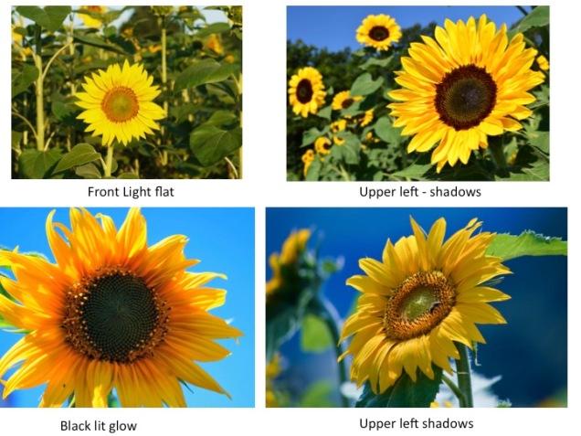 better-sunflowers